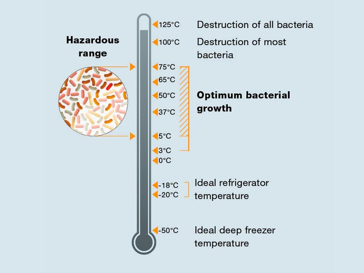 细菌繁殖温度