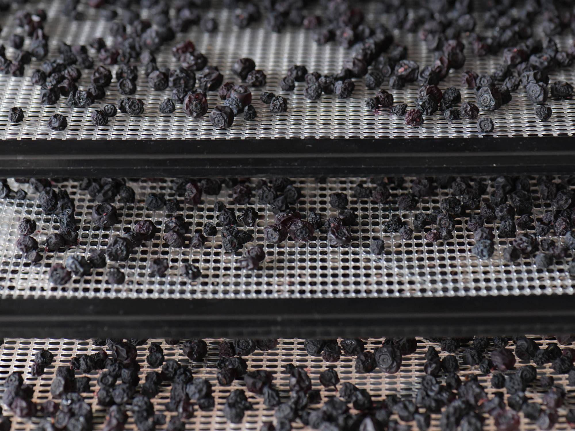 Image-freeze-drying-2000x1500px.jpg